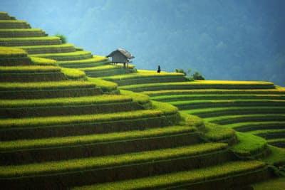 ベトナムのコメは米菓に合わなかった(PIXTA)