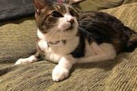 猫がいなくなっても発信器付き首輪をつけていれば捜索費が補償される