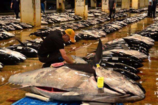那覇市の泊魚市場に水揚げされた生鮮マグロが競りを待つ