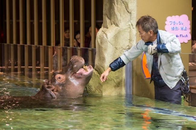 旭山動物園には坂東園長ほか3人の獣医師が勤務する(桜井省司撮影、提供:株式会社LEGION)