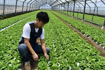 JAくるめは17年、サラダ菜で国際認証を取得した