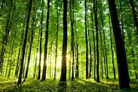 森の癒し効果でストレスが緩和され、心身共にリラックスできる(C)Ruslan Ivantsov-123rf