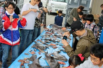 「深海魚撮影会」には100人以上の参加希望がある