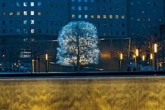 米国ニューヨーク州にある国立9.11追悼博物館のマメナシ。通称「サバイバーツリー」(Photograph by Diane Cook and Len Jenshel)