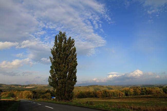 秋空のもとにそびえる「ケンとメリーの木」(北海道・美瑛)