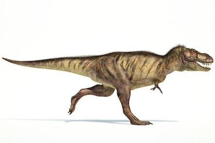 Tレックスの腕は巨大な体に対して滑稽なほど小さいが、この鉤爪の付いた長さ1メートルほどの腕が、従来考えられてきたよりも恐ろしい武器だった可能性があるとの研究が学会で発表された(ILLUSTRATION BY LEONELLO CALVETTI, ALAMY)