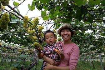 ブドウ畑で息子を抱きかかえるキスヴィン・ワイナリーの斎藤まゆさん
