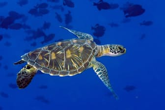 自然保護論者が望む形で、新しい国際条約が締結されれば、海洋生物は救われるかもしれない。(PHOTOGRAPH BY BRIAN J. SKERRY, NATIONAL GEOGRAPHIC CREATIVE)