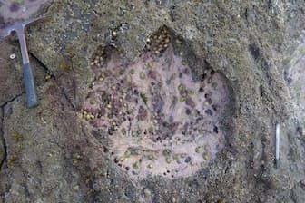 スコットランドのスカイ島で、新たに恐竜の足跡50個が見つかった。その多くが竜脚類と呼ばれる首の長い恐竜のものだ(PHOTOGRAPH BY STEVE BRUSATTE, NATIONAL GEOGRAPHIC CREATIVE)