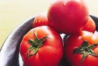 旬を迎えたトマト
