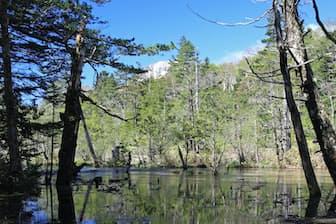 長野県の景勝地として人気がある上高地(松本市)=PIXTA