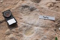 数万年前のサウジアラビアは、カバなどの動物が歩き回る青々とした草原地帯だった(PHOTOGRAPH COURTESY SAUDI PRESS AGENCY (SPA), MINISTRY OF CULTURE AND INFORMATION, SAUDI ARABIA)