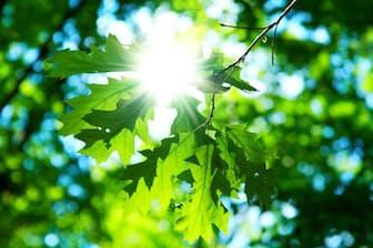 ビタミンDは食物からとるだけでなく、紫外線を浴びることでも合成される。写真はイメージ=(c)Nataliya Hora-123RF