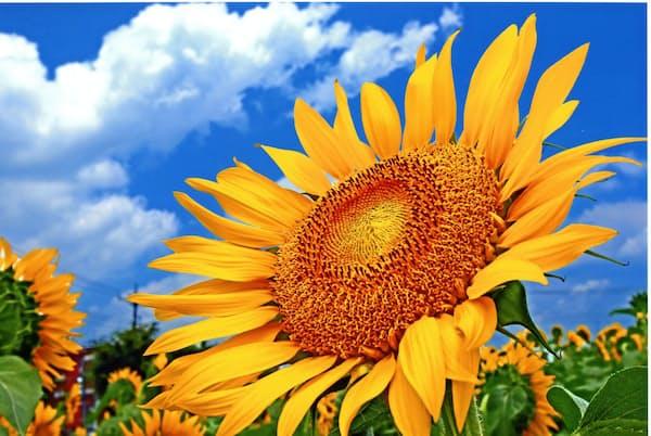 ひまわりガーデン武蔵村山が2016年に開いたフォトコンテストの最優秀賞「太陽エネルギーをチャージ中」(撮影・相馬昭夫氏)