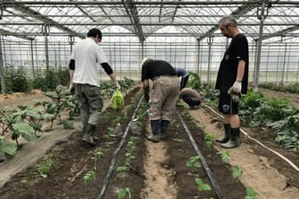 野菜の栽培を行う佐野厚生総合病院の精神科デイケアに通う患者ら(6月、栃木県佐野市)