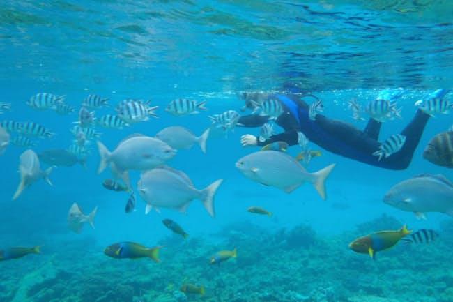 独特の濃いブルーと集まってくる魚たち。小笠原諸島でのシュノーケリングは感動の連続!(写真:japan-guide.com)