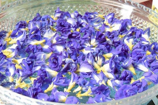 タイでは染料にも使われるバタフライピー