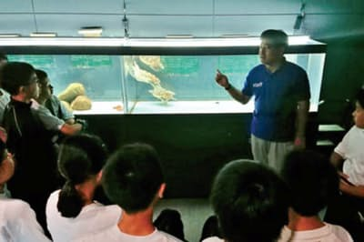 屋外プールでは悠々とウミガメが泳ぎ、手洗い場ではヒトデやナマコが待機し、地元の小学生が見学に訪れることも多い(むろと廃校水族館)