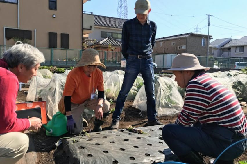 都市部の「生産緑地」で野菜などの栽培体験が人気だ(3日、東京都調布市)