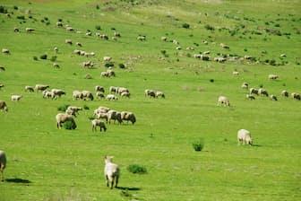 サイゼリヤは農業や牧畜が盛んな豪州に調達の手を広げた。写真はイメージ=PIXTA