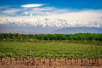 南米大陸最高峰アコンカグアの玄関口、メンドーサはワインの一大産地