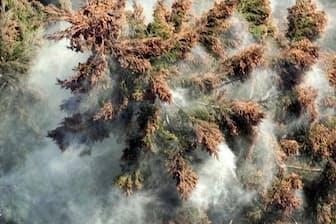 スギ花粉の飛散(写真はイメージ)