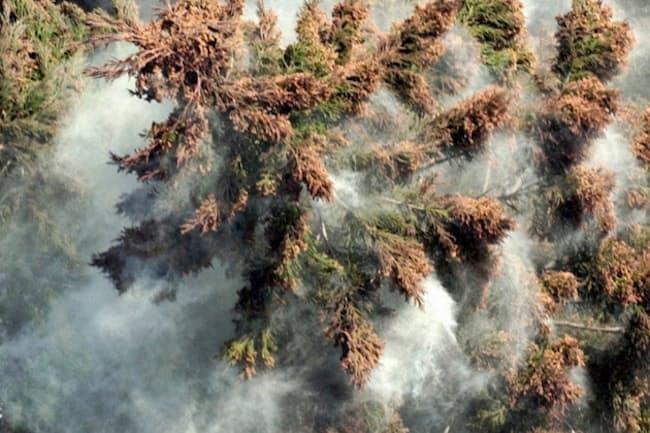 「スギ花粉」の画像検索結果