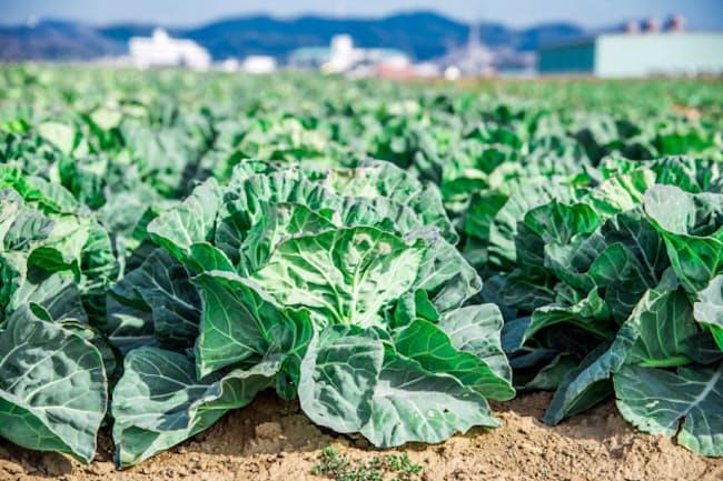 農家への営業はジーパン姿で通った。写真はイメージ=PIXTA