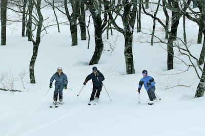 雪の?#20889;イ?#30906;かめながらスキーを楽しむオース?#21435;楗轔?#20154;観光客(岩手県北上市の夏?#36879;?#21407;スキー場)