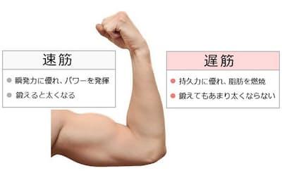 筋肉には大きく分けて「速筋」と「遅筋」がある。原図=(c) masterwilu-123RF