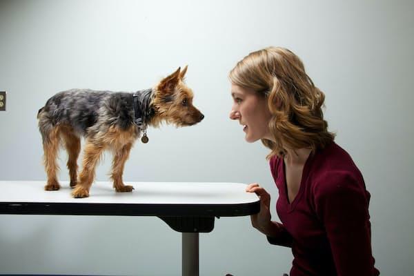 1681匹の犬とその飼い主の性格を調べた結果、彼らは似たような行動を取る傾向にあることがわかった(PHOTOGRAPH BY VINCENT J. MUSI, NAT GEO IMAGE COLLECTION)