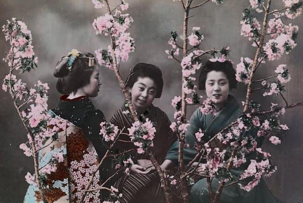 着物姿の日本女性と桜の木。エライザ・シドモアは後に、桜の木をワシントンD.C.にも植えようと尽力した。彼女は横浜の外国人墓地に眠っている(PHOTOGRAPH BY ELIZA R. SCIDMORE, NATIONAL GEOGRAPHIC CREATIVE)