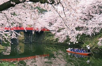 まもなく桜の見ごろを迎える青森の弘前公園