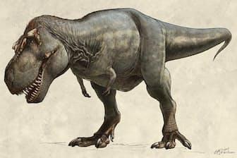 1991年に発掘された史上最大のティラノサウルス「スコッティ」の想像図。生きていた当時の体重は8.85トンと推定されている(ILLUSTRATION BY BETH ZAIKEN, THE ROYAL SASKATCHEWAN MUSEUM)
