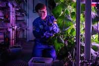 ノイマイヤー南極基地の温室でキュウリを収穫する、ドイツのアルフレッド・ウェゲナー極地海洋研究所の地球物理学者ヨゼフィーネ・シュターケマン氏(PHOTOGRAPH BY ESTHER HORVATH)