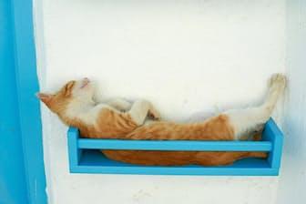 青い棚の中で仰向けになって眠るネコ。ギリシャ、キクラデス諸島で撮影(PHOTOGRAPH BY TUUL AND BRUNO MORANDI)