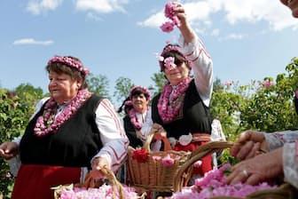 毎年6月最初の週末に開催されるバラ祭り。ブルガリアの伝統的な民族衣装を着た女性たちがバラの花を摘む(Photograph by Yana Paskova)