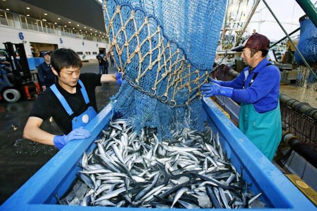 韓国の輸入禁止措置を認めたWTO上級審の判断は、東北の水産業者には重荷となる(17年の宮城県・女川漁港でのサンマ初水揚げ)