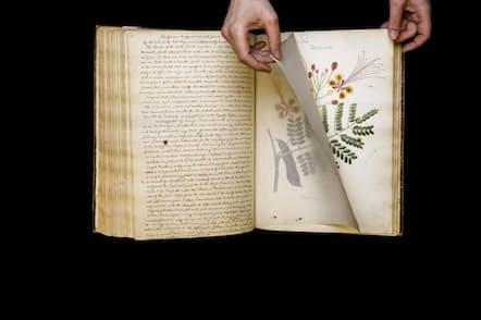 米大陸の熱帯から亜熱帯に分布するオオゴチョウ(Caesalpinia pulcherrima)のイラスト。コーネル大学図書館の稀覯本写本コレクションに所蔵されていたアン・ウルストンクラフトの手描き原稿に含まれていたもの(PHOTOGRAPH BY ROBERT CLARK)