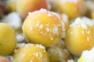 塩で漬けるとなぜ保存できるようになるのか(梅の実と塩で梅干しを作る)