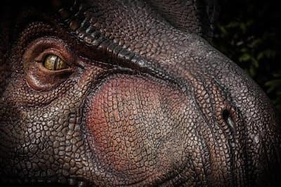 ティラノサウルス・レックスの復元図。その嗅覚は鋭く、現代のイエネコよりわずかに劣る程度だったと考えられる(ILLUSTRATION BY ROGER HALL, ALAMY)