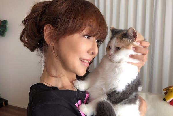 疲れた心も癒やされる、猫の愛らしい姿(NikkeiLUXEより)