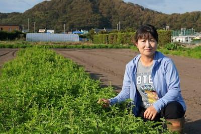 足達さんの大紺屋農園では、タイ野菜など海外原産の野菜を年間80種類生産する(9月下旬、千葉県南房総市)