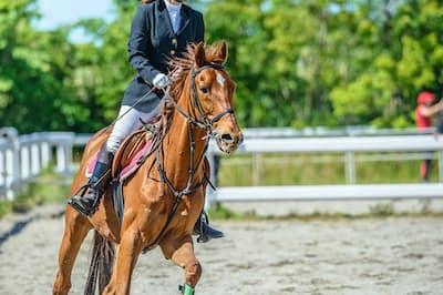 馬とのふれあいは癒やしの効果も期待されている。写真はイメージ=PIXTA