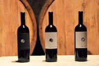 フリウリ・ヴェネツィア・ジュリア州、ヴォドピーヴェッツのワイン