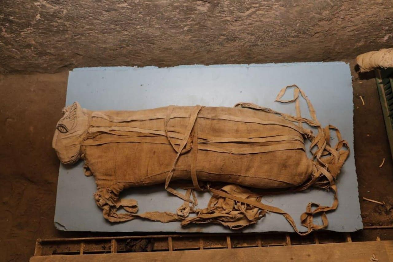 生後約8カ月の子ライオンのミイラ(PHOTOGRAPH COURTESY SUPREME COUNCIL OF ANTIQUITIES OF EGYPT)