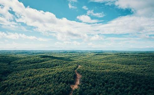 ・インドネシアでは植林事業に取り組む