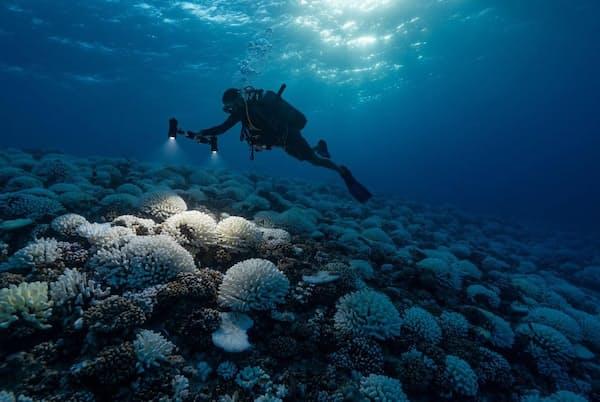 海とサンゴは気候変動による激しいストレスにさらされていて、すでに回復が不可能になるレベルのダメージを受けている可能性がある(PHOTOGRAPH BY ALEXIS ROSENFELD, GETTY IMAGES)