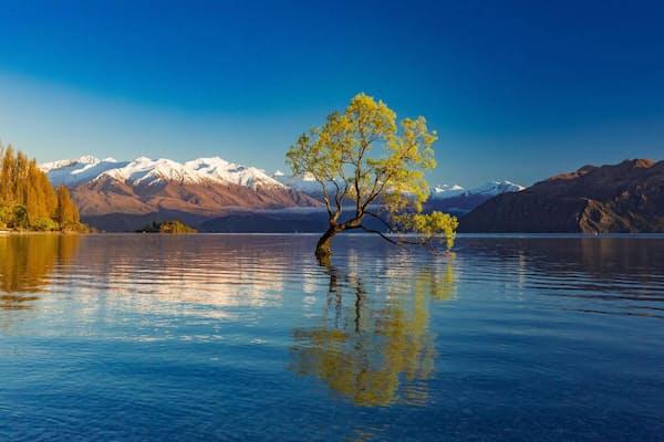 「ワナカ湖の孤独な木」(ニュージーランド、ワナカ)まるで湖の底から生えてきたようなヤナギの木。マウント・アスパイアリング国立公園の端に位置するワナカ湖を訪れた人は、必ずこの孤独な木に目を奪われる(PHOTOGRAPH BY MARTIN VALIGURSKY, ALAMY)