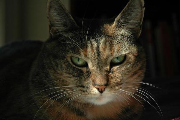 ネコは、顔の表情で感情を伝える。人と同じだ(PHOTOGRAPH BY MELFORD TAYLOR, NAT GEO IMAGE COLLECTION)